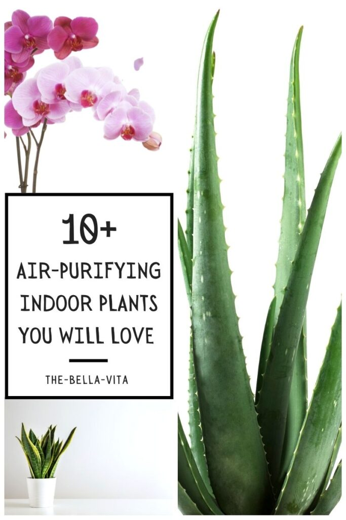 air-purifying indoor plants